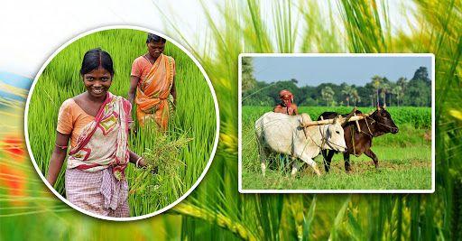 দেড় লাখ কৃষক পাবেন সোয়া ১০ কোটি টাকার প্রণোদনা